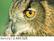 Купить «Филин», фото № 2449928, снято 24 апреля 2007 г. (c) Сергей Соболев / Фотобанк Лори