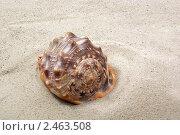 Морская раковина на песке. Стоковое фото, фотограф Валентин Олейников / Фотобанк Лори