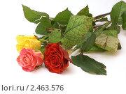 Три розы. Стоковое фото, фотограф Валентин Олейников / Фотобанк Лори
