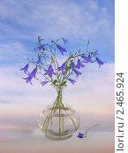 Купить «Букет колокольчиков в вазе на фоне неба», фото № 2465924, снято 2 июня 2010 г. (c) Елена Завитаева / Фотобанк Лори