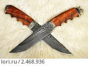 Купить «Охотничий нож на шкуре», фото № 2468936, снято 25 января 2010 г. (c) Миленин Константин / Фотобанк Лори