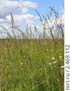 Поле, травы. Стоковое фото, фотограф Сидоров Артем Романович / Фотобанк Лори