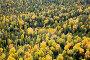 Осенняя тайга, фото № 2475976, снято 15 сентября 2010 г. (c) Владимир Мельников / Фотобанк Лори