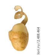 Купить «Картофель с кожурой», фото № 2488464, снято 10 декабря 2018 г. (c) Денис Ларкин / Фотобанк Лори