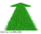 Купить «Стрелка из травы вверх», иллюстрация № 2498392 (c) Маринченко Александр / Фотобанк Лори