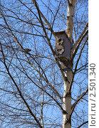 Скворечник на дереве. Стоковое фото, фотограф Ольга Шевченко / Фотобанк Лори
