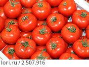 Купить «Помидоры», эксклюзивное фото № 2507916, снято 11 декабря 2010 г. (c) Дмитрий Неумоин / Фотобанк Лори