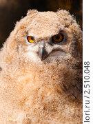 Купить «Сибирский филин (Bubo bubo sibiricus)», фото № 2510048, снято 24 мая 2018 г. (c) Сергей Петерман / Фотобанк Лори