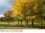 Купить «Осенний парк», фото № 2516532, снято 3 октября 2009 г. (c) Евгений Дробжев / Фотобанк Лори