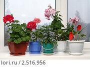 Купить «Комнатные цветы на подоконнике», фото № 2516956, снято 7 мая 2011 г. (c) Михаил Яковлев (ktynzq) / Фотобанк Лори