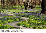 Купить «Первоцветы», фото № 2520440, снято 29 апреля 2011 г. (c) ИВА Афонская / Фотобанк Лори