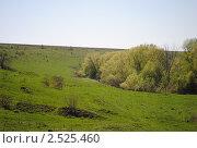 Зеленые холмы. Стоковое фото, фотограф Стрельникова Татьяна / Фотобанк Лори