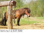 Пони. Стоковое фото, фотограф Байчихина Наталья / Фотобанк Лори
