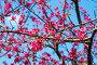 Цветущее абрикосовое дерево, фото № 2538540, снято 25 апреля 2011 г. (c) Лифанцева Елена / Фотобанк Лори