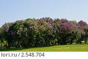 Купить «Сиреневый сад», фото № 2548704, снято 21 мая 2011 г. (c) ИВА Афонская / Фотобанк Лори