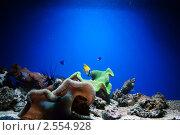 Аквариумные рыбки. Стоковое фото, фотограф Анна Омельченко / Фотобанк Лори