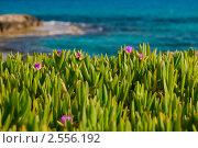 Купить «Цветы в траве у моря», фото № 2556192, снято 8 мая 2011 г. (c) Фадеева Марина / Фотобанк Лори