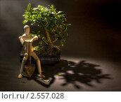 Купить «Посадить дерево ...», фото № 2557028, снято 11 апреля 2010 г. (c) Andreas Neufeld / Фотобанк Лори