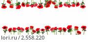 Купить «Цветочная рамка из красных анемонов», фото № 2558220, снято 22 февраля 2011 г. (c) Татьяна Белова / Фотобанк Лори