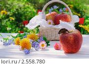Купить «Дачный натюрморт - красные яблоки с цветами на белом столе в летний день», фото № 2558780, снято 22 мая 2011 г. (c) Светлана Зарецкая / Фотобанк Лори