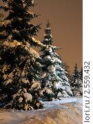 Купить «Заснеженные ели в ночном парке», фото № 2559432, снято 10 января 2011 г. (c) Яков Филимонов / Фотобанк Лори