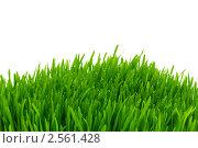 Купить «Зеленая трава», фото № 2561428, снято 26 марта 2019 г. (c) Elnur / Фотобанк Лори