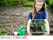 Купить «Девочка с рассадой помидоров на огороде», фото № 2562320, снято 20 мая 2010 г. (c) Величко Микола / Фотобанк Лори
