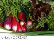 Молодая зелень для салата. Стоковое фото, фотограф Екатерина Жукова / Фотобанк Лори