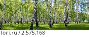 Купить «Березовая роща», фото № 2575168, снято 27 апреля 2018 г. (c) Елена Блохина / Фотобанк Лори