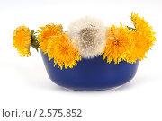 Купить «Одуванчики в вазе на белом фоне», фото № 2575852, снято 27 мая 2011 г. (c) Владимир Журавлев / Фотобанк Лори