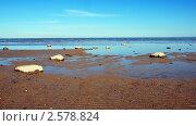 Петергоф, Финский залив. Стоковое фото, фотограф Дмитрий Моисеевских / Фотобанк Лори