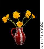 Купить «Одуванчики  в вазе на черном фоне», фото № 2579252, снято 27 мая 2011 г. (c) Владимир Журавлев / Фотобанк Лори