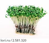 Купить «Пучок зелёной рассады», фото № 2581320, снято 7 марта 2011 г. (c) Дарья Петренко / Фотобанк Лори