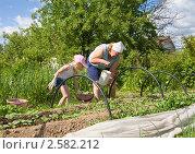 Купить «Бабушкина помощница», эксклюзивное фото № 2582212, снято 5 июня 2011 г. (c) Владимир Чинин / Фотобанк Лори
