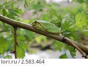 Купить «Зеленая лягушка», фото № 2583464, снято 15 мая 2011 г. (c) Елена Гордеева / Фотобанк Лори