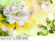 Купить «Цветение», фото № 2599800, снято 10 мая 2009 г. (c) Татьяна Яковлева Серкова / Фотобанк Лори