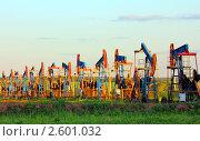 Купить «Добыча нефти - ряд нефтяных качалок», фото № 2601032, снято 13 июня 2011 г. (c) Михаил Коханчиков / Фотобанк Лори