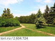 Перекресток трех тропинок. Стоковое фото, фотограф Кирилл Губа / Фотобанк Лори