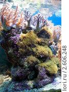Коралловый риф в аквариуме. Стоковое фото, фотограф Пётр Ваньков / Фотобанк Лори