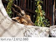 Жаркий день в Ленинградском зоопарке. Стоковое фото, фотограф Елена Бабаина / Фотобанк Лори