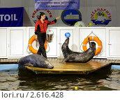 Купить «Выступление тюленей в океанариуме Мурманска», фото № 2616428, снято 12 июля 2008 г. (c) Михаил Марковский / Фотобанк Лори