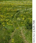 Купить «Дорога в поле спускается с холма», фото № 2628708, снято 12 июня 2011 г. (c) Павлюченко Елена / Фотобанк Лори