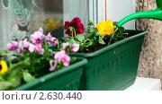 Купить «Цветочный сад на балконе. Полив.», видеоролик № 2630440, снято 10 мая 2011 г. (c) Игорь Жоров / Фотобанк Лори
