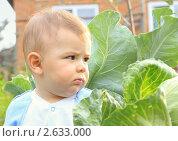 Купить «Маленький мальчик на грядке с капустой», эксклюзивное фото № 2633000, снято 6 августа 2010 г. (c) Олеся Сарычева / Фотобанк Лори