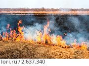 Пожар на поле - горит трава. Стоковое фото, фотограф Ольга Зайцева / Фотобанк Лори