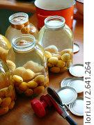 Купить «Приготовление абрикосового компота», фото № 2641264, снято 2 августа 2009 г. (c) Величко Микола / Фотобанк Лори