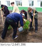 Купить «Посадка деревьев», фото № 2641396, снято 24 июня 2011 г. (c) Галина Хорошман / Фотобанк Лори