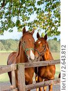 Купить «Лошади в загоне», фото № 2643812, снято 19 марта 2019 г. (c) Маргарита Бородина / Фотобанк Лори