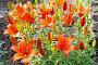 Ярко-красные лилии, фото № 2650344, снято 29 марта 2017 г. (c) Хайрятдинов Ринат / Фотобанк Лори