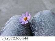 Цветок. Стоковое фото, фотограф Алёна Степанова / Фотобанк Лори